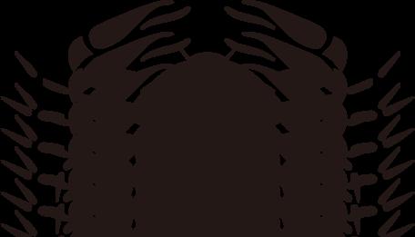 zodiac020